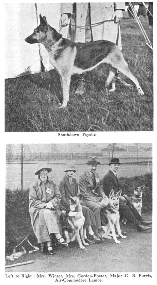 Early English GSDs